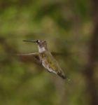 Kolibri (Michael Ochse)